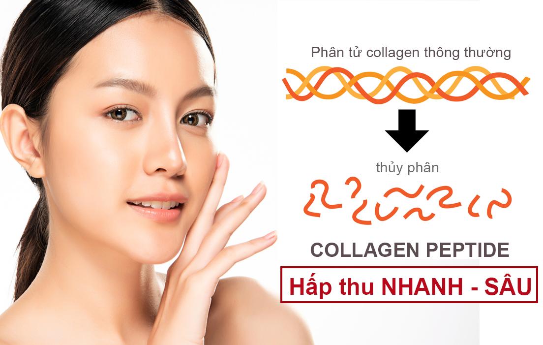 """Những gạch đầu dòng đáng lưu ý cho chị em muốn sử dụng collagen để """"bồi bổ"""" cho da - Ảnh 2"""