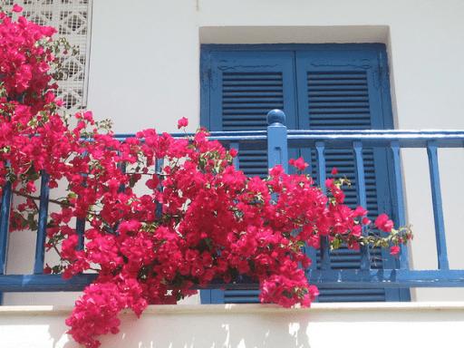 Gia đình giàu có thường trồng hoa ban công theo phong thủy thế nào để hút sạch tài lộc trong thiên hạ? - Ảnh 2