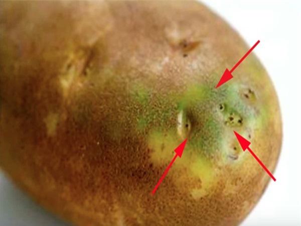6 loại củ quả quen thuộc nhưng chớ dại ăn cả vỏ kẻo ngộ độc chết người