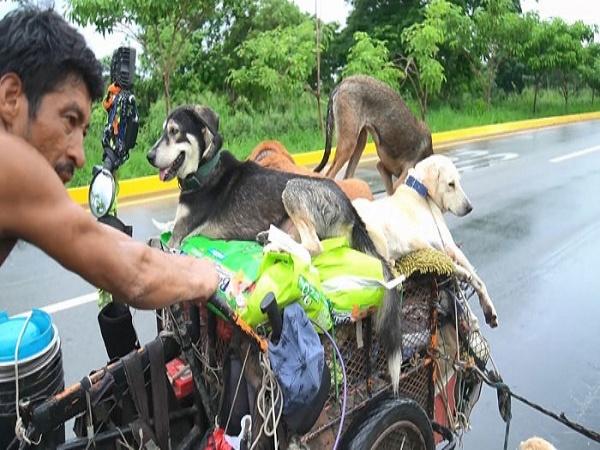 6 năm đi 14.000 km cứu gần 500 chú chó hoang