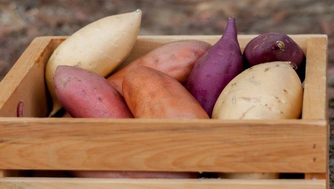 Đây là lý do tại sao khoai lang lại được những người ăn kiêng ưa chuộng đến vậy - Ảnh 4