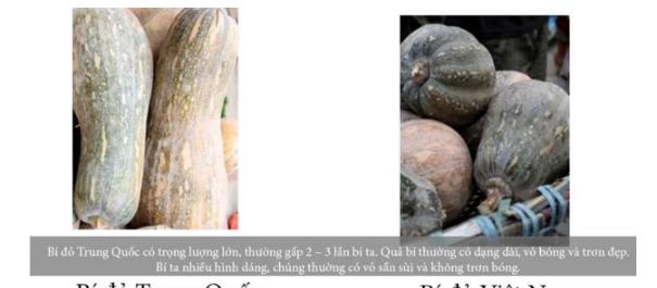 20 cách phân biệt thực phẩm Trung Quốc và Việt Nam, biết để bảo vệ sức khỏe cả gia đình - Ảnh 5