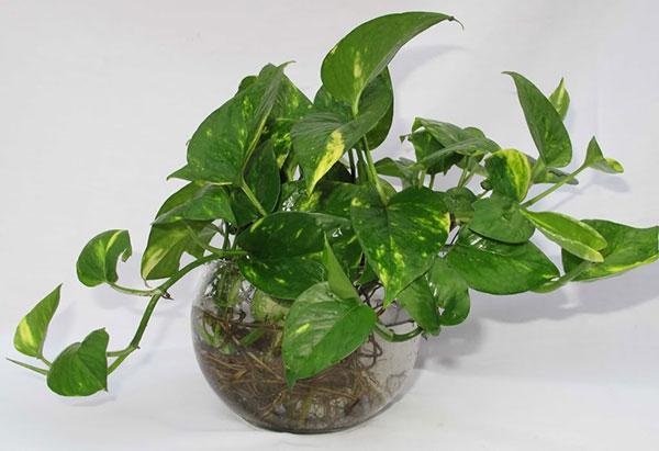 10 loại cây cảnh trồng trong nhà có chứa chất kịch độc, lỡ miệng ăn vào mất mạng như chơi - Ảnh 2