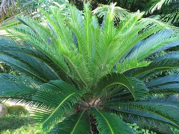 10 loại cây cảnh trồng trong nhà có chứa chất kịch độc, lỡ miệng ăn vào mất mạng như chơi - Ảnh 4