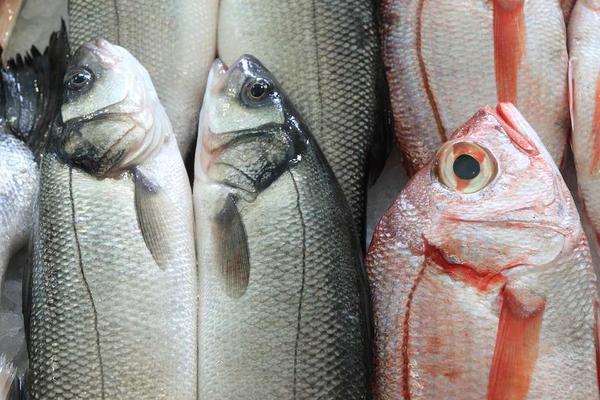 Ăn thịt cá tốt cho sức khỏe nhưng có 2 loại cá là 'bể chứa' các kim loại nặng tốt nhất không nên ăn - Ảnh 1