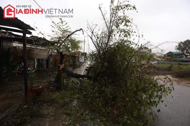 Cảnh tượng tan hoang ở Quảng Ngãi sau khi bão số 9 đổ bộ - Ảnh 3