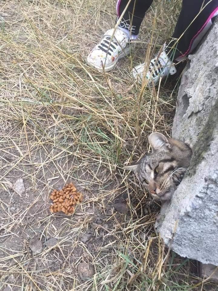 'Nghẹt thở' cuộc giải cứu chú mèo bị kẹt trong ống bê tông nhỏ hẹp, dân mạng liền xôn xao: Giống Tôn Ngộ Không bị núi đè 500 năm khi xưa - Ảnh 2
