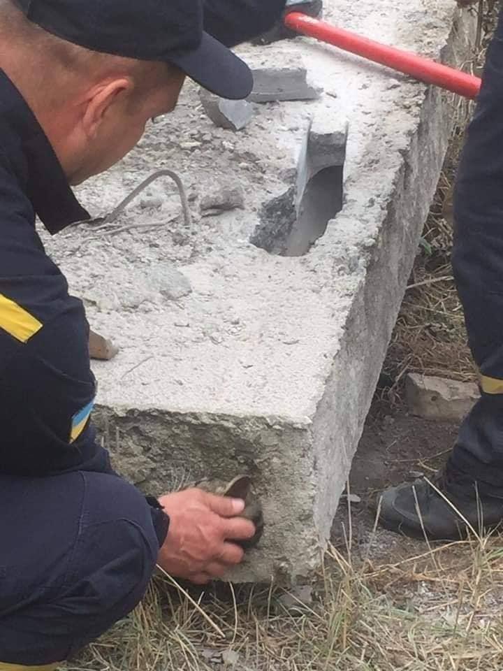 'Nghẹt thở' cuộc giải cứu chú mèo bị kẹt trong ống bê tông nhỏ hẹp, dân mạng liền xôn xao: Giống Tôn Ngộ Không bị núi đè 500 năm khi xưa - Ảnh 9