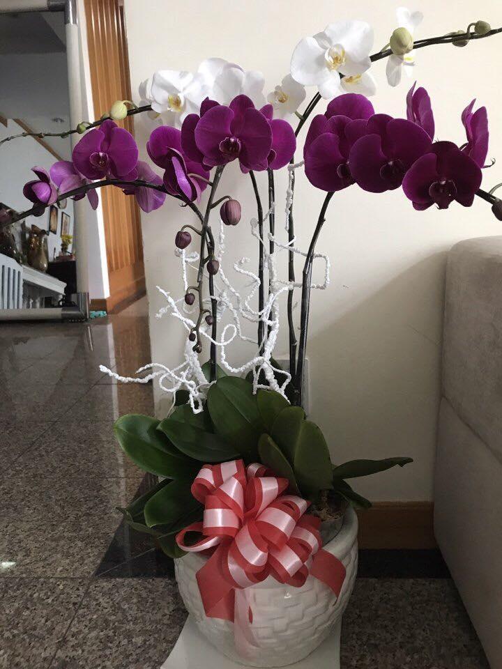 Phi Thanh Vân khoe món quà giá trị từ tình cũ đại gia nhân ngày 8.3 - Ảnh 6