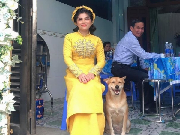 Biểu cảm hớn hở của chú chó vào ngày chủ kết hôn gây bão mạng xã hội, dân mạng giải thích lý do khiến ai cũng cười gật gù