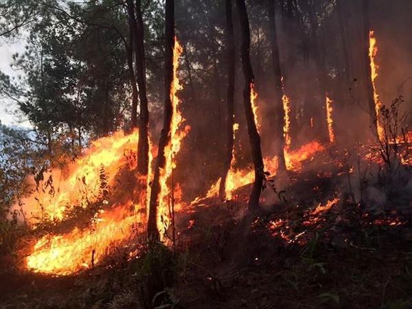 Một phụ nữ tử vong trong lúc tham gia chữa cháy rừng