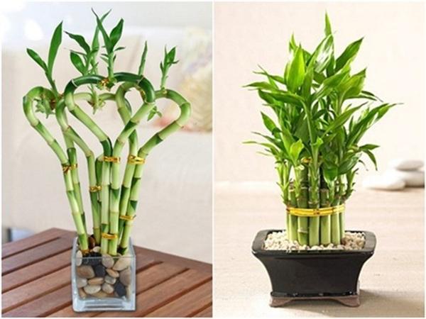 Năm mới cứ trồng 5 cây phong thủy này trong nhà đảm bảo tài lộc chạy vào nhà