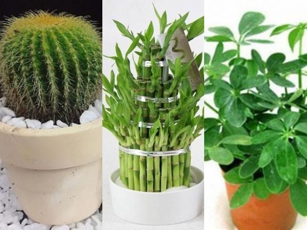 12 loại cây cảnh trồng trong nhà hợp phong thủy với từng tuổi năm Canh Tý 2020