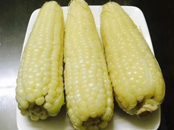 Ngô rất giàu dinh dưỡng nhưng có 4 đối tượng tuyệt đối không nên ăn ngô - Ảnh 1