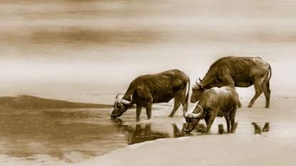 Mẹ thuộc 4 con giáp này, con cái yên tâm phúc dày mệnh lớn, tài lộc hưởng suốt đời - Ảnh 2