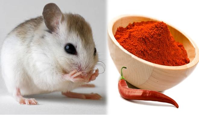 Chỉ cho bạn 2 cách để nhà không có bóng dáng con chuột nào chẳng cần tới thuốc diệt