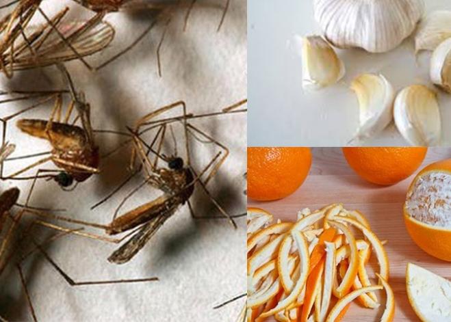 5 cách đuổi muỗi cút xéo khỏi nhà ngày mưa ẩm