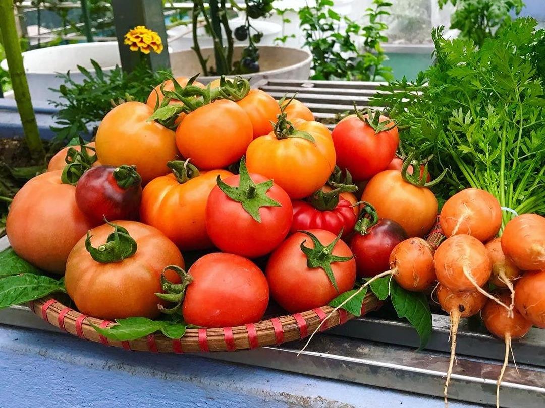 Mẹ đảm 'mách nước' cách thiết kế và trồng rau trên sân thượng cực dễ, rau trái có ăn quanh năm