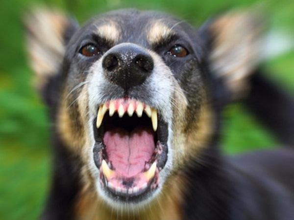 Đồng Nai: Người đàn ông thiệt mạng vì... chửi một con chó