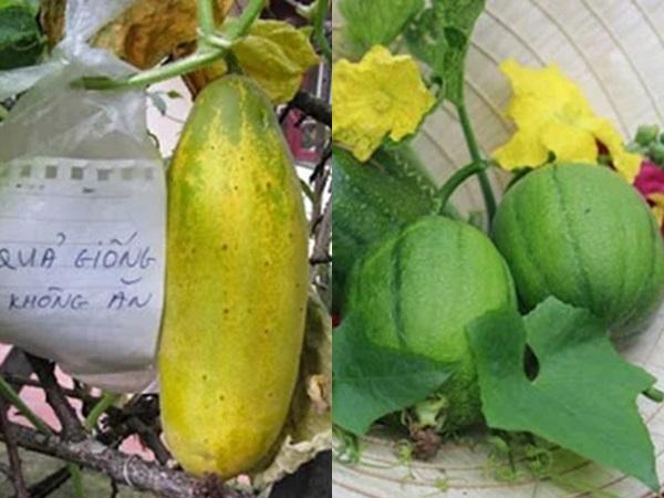 2 loại quả càng để già càng bổ, người Việt vứt đi mà không biết đang bỏ 'phí của giời'