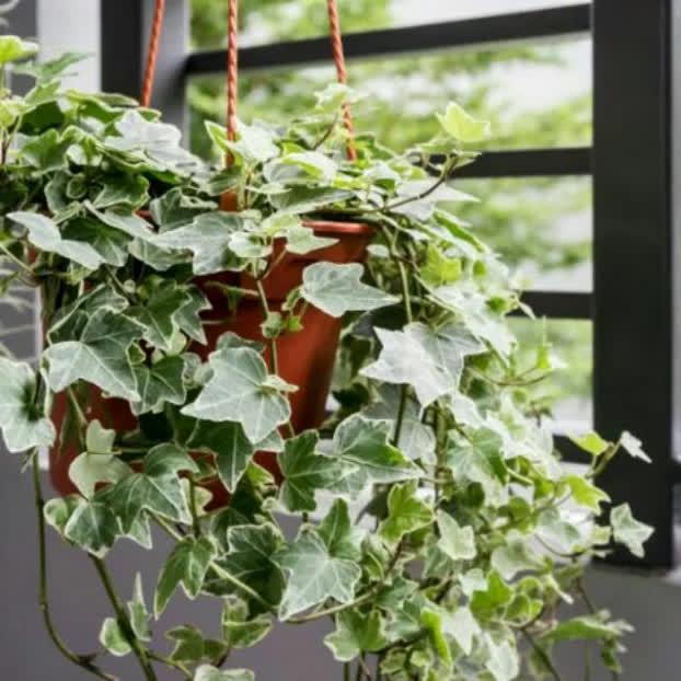 9 loại cây cảnh giải khí độc trong nhà, lọc sạch không khí ai cũng nên trồng quanh nhà - Ảnh 7