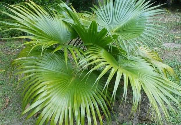 9 loại cây cảnh giải khí độc trong nhà, lọc sạch không khí ai cũng nên trồng quanh nhà - Ảnh 8