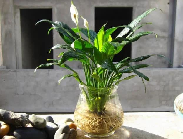 9 loại cây cảnh giải khí độc trong nhà, lọc sạch không khí ai cũng nên trồng quanh nhà - Ảnh 9