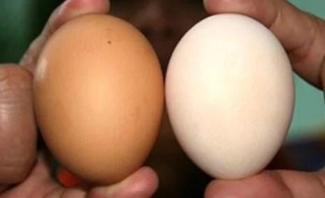 Cách chọn mua trứng ngon, nên chọn quả to hay quả nhỏ - Ảnh 1