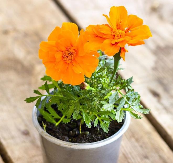 10 loại cây trồng trong nhà có thể gây ảnh hưởng xấu đến sức khỏe của bạn - Ảnh 5