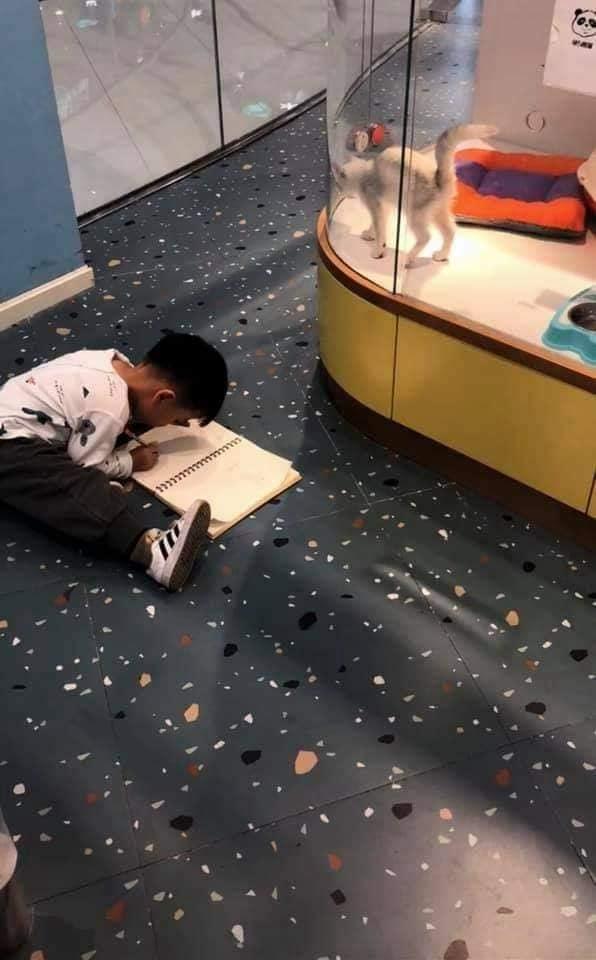 Cậu bé lăn lộn cả tiếng để vẽ mèo nộp cho cô giáo, tưởng đẹp miễn chê ai ngờ lại thành ra thế này - Ảnh 1
