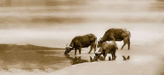 4 con giáp gặp dữ hóa lành vì được quý nhân phù trợ trong tháng 12 dương lịch - Ảnh 1