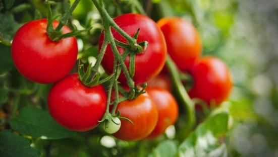 5 loại rau củ tàn phá sức khỏe khủng khiếp nếu ăn nhiều, người bị bệnh thận đặc biệt chú ý - Ảnh 1