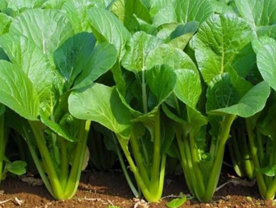 5 loại rau củ tàn phá sức khỏe khủng khiếp nếu ăn nhiều, người bị bệnh thận đặc biệt chú ý - Ảnh 2