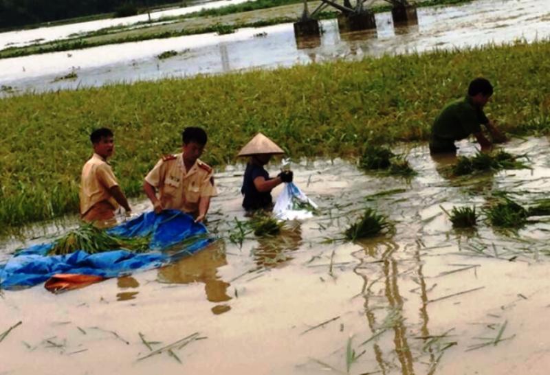 Ngã xuống ruộng lúa khi chơi đùa với chị, bé 22 tháng tuổi tử vong ở Nghệ An