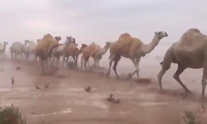 Cảnh tượng chưa từng xuất hiện trên sa mạc Ả Rập 'gây bão' cộng đồng mạng