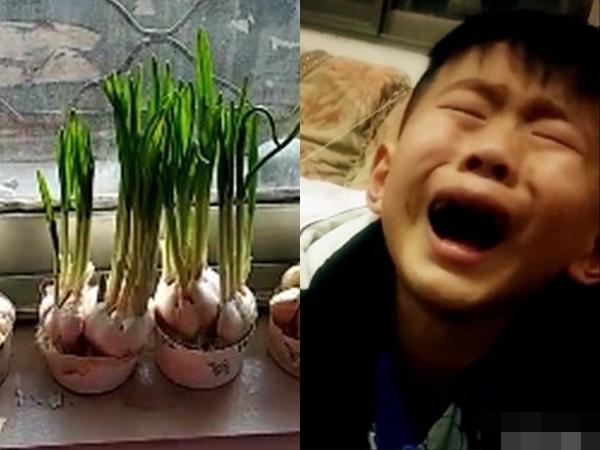Bé trai khóc cạn nước mắt bên bụi tỏi bị vặt trụi và câu chuyện phía sau khiến dân mạng cười nín thở