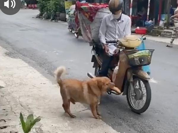 """Chú chó mua bánh mì thiếu một cách """"uy tín"""" khiến nhiều người phát cuồng: Chắc là mối ruột của chú bán bánh mì rồi!"""