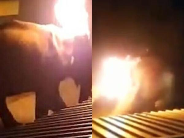 Cụ voi 40 tuổi chết tức tưởi sau khi bị người dân ném lốp xe cháy rực lên người, cảnh tượng con vật hoảng loạn trốn chạy khiến dư luận dậy sóng