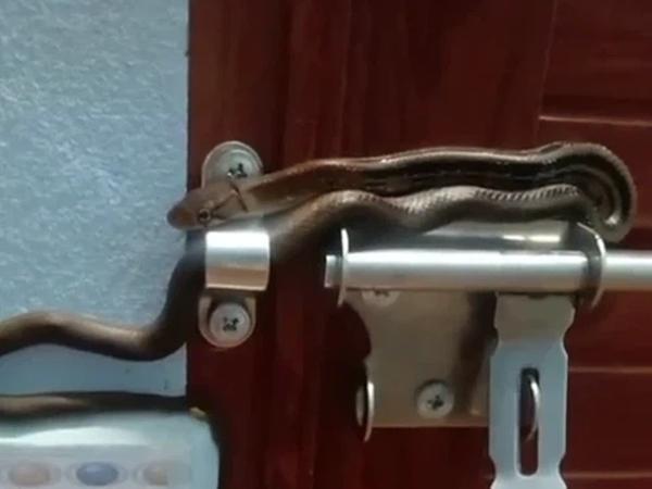 """Đang đêm tỉnh dậy định mở cửa, chủ nhà thất kinh khi nhìn thấy chốt cửa biến hình thành """"bé Na"""" dài cả mét"""