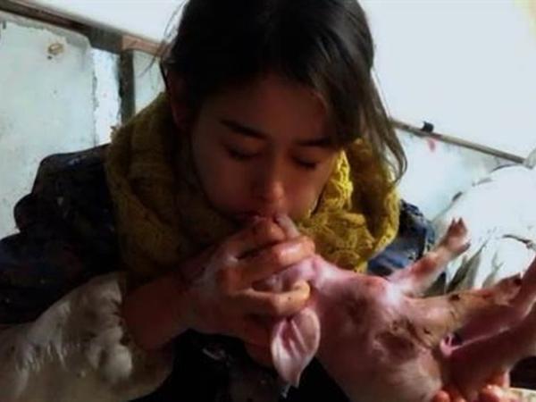 Hot girl xinh đẹp kiếm 3,5 tỷ mỗi năm nhờ hô hấp nhân tạo cho lợn