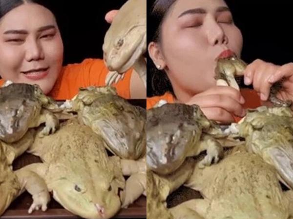 Làm clip ăn Mukbang trên sóng, nữ streamer khiến người xem khiếp sợ, chuyển kênh khi ăn ếch luộc nguyên con