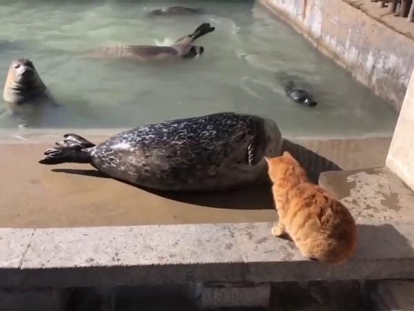 Quá ồn ào, hải cẩu béo bị mèo ú táng không trượt phát nào