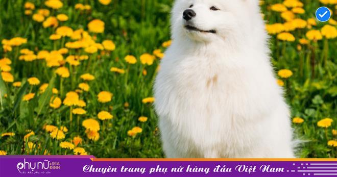 'Cậu ấm cô chiêu' nhà giàu thường nuôi các loại 'thú cưng Thần Tài 'nào để kéo tài lộc về nhà?