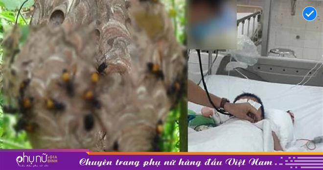 Nghệ An: Sang nhà hàng xóm chơi cùng người thân, bé 2 tuổi bị đàn ong vò vẽ đốt 50 nốt, tử vong thương tâm