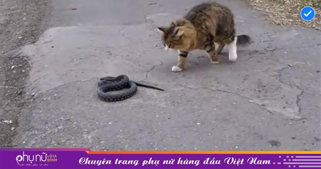 Chán bắt nạt chuột, mèo đi 'gây thù' với rắn, chiến thuật cực nhây khiến đối thủ không chân quay đầu bỏ chạy