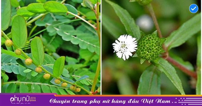 Lương y Nguyễn Minh Phúc chỉ ra 4 vị thuốc quý hỗ trợ điều trị COVID-19 ở thể nhẹ