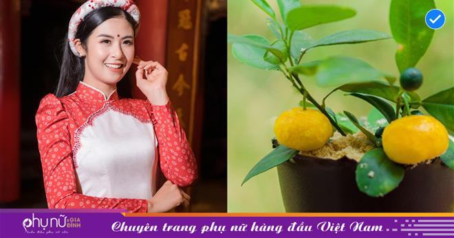 Hoa hậu Ngọc Hân khoe 'cây quất mini' ngọt ngào, thơm phức khiến dân tình 'lác mắt', chỉ dám nhìn không nỡ ăn