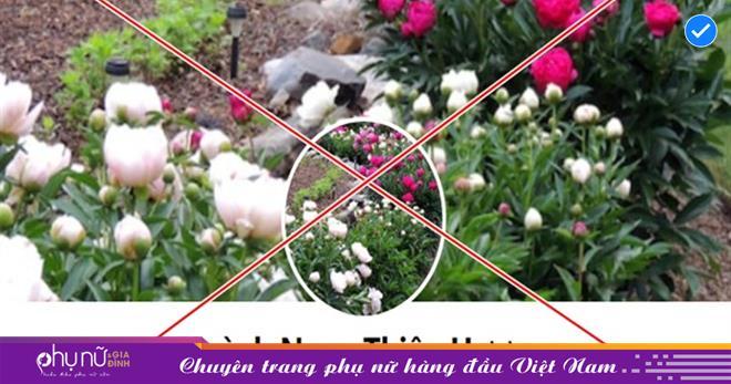 Đối thủ của bà Phương Hằng 'người phụ nữ giấu mặt' Huỳnh Ngọc Thiên Hương bị 'tấn công'