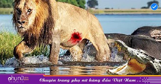 Oai hùng, dũng mãnh trên bờ nhưng cũng có ngày sư tử 'TÁI XANH MẶT MÀY' khi bị kẻ thù dìm xuống nước