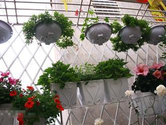 Những loại cây phong thủy nên trồng ở ban công